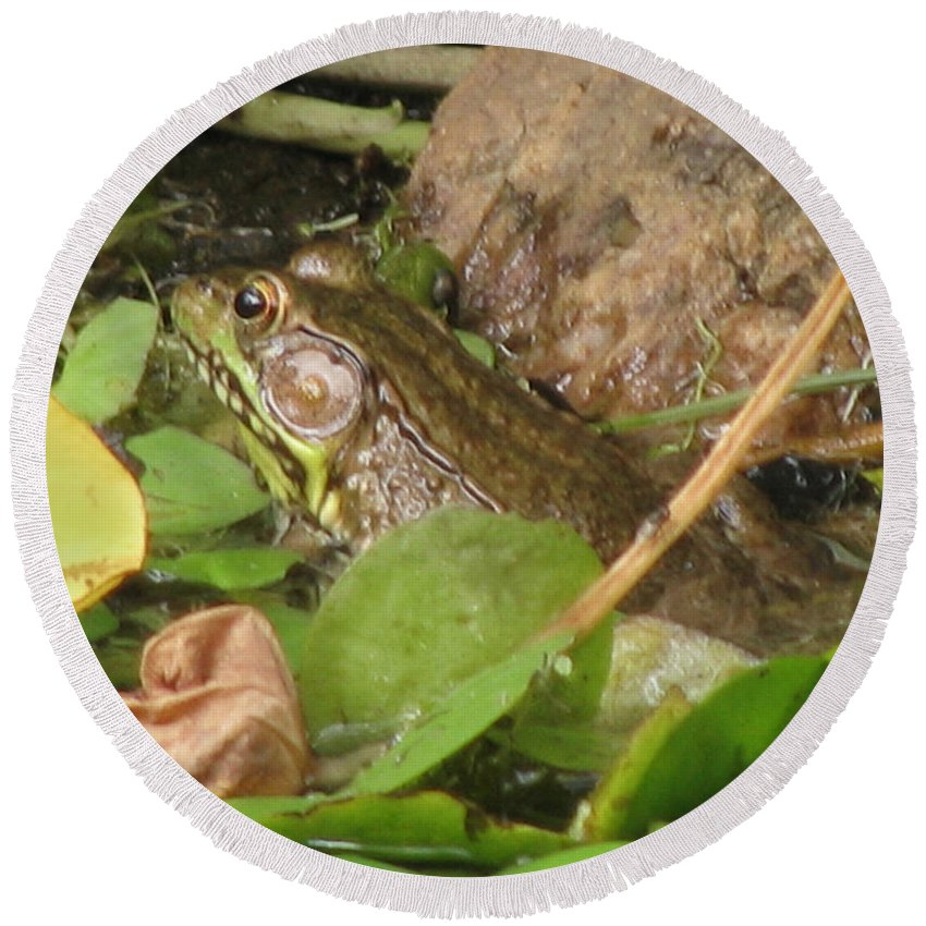 Frog Round Beach Towel featuring the photograph Leopard Frog by Donna Brown
