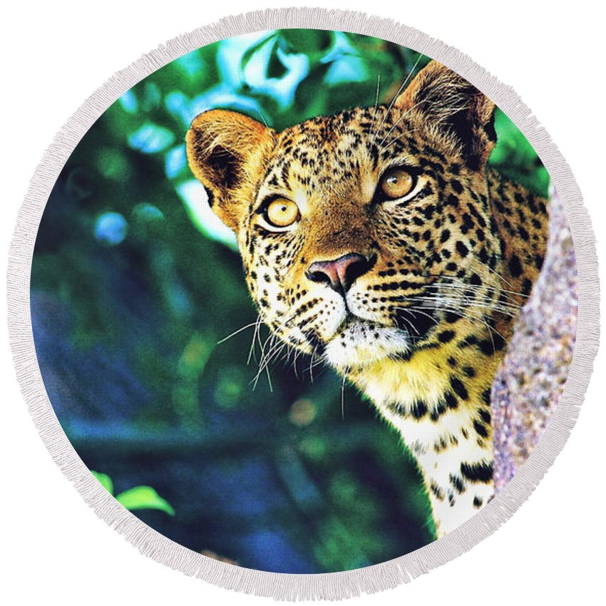 Leopard Round Beach Towel featuring the digital art Leopard by Zia Low