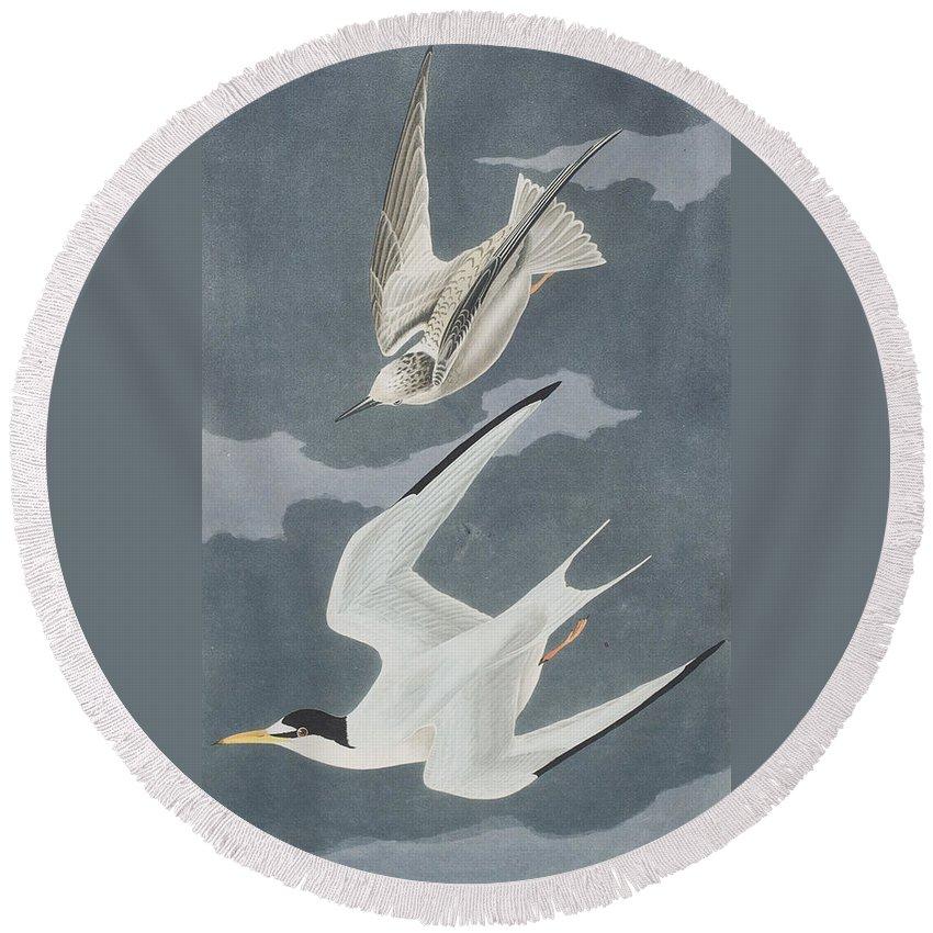 Lesser Round Beach Towel featuring the painting Lesser Tern by John James Audubon