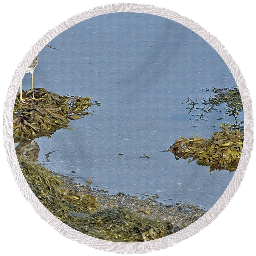 Sandpiper Round Beach Towel featuring the photograph Lesser Yellowlegs by Colleen English
