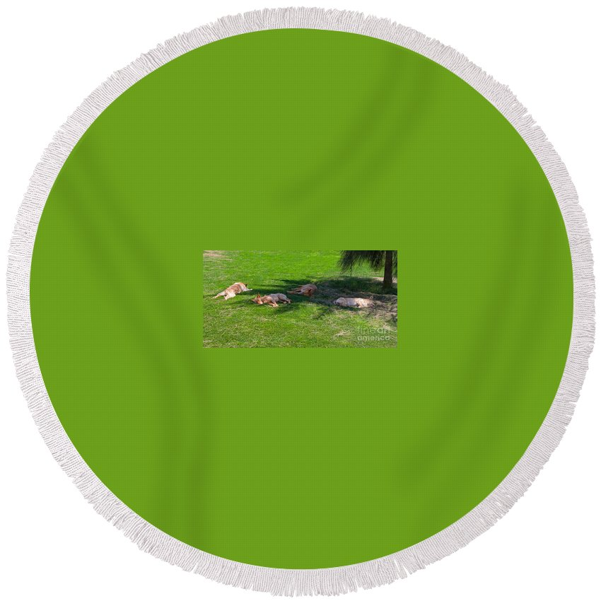 Dogs Round Beach Towel featuring the photograph Let Sleeping Dogs Lie by Louise Heusinkveld
