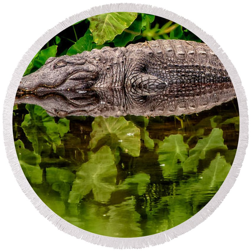 Alligator Round Beach Towel featuring the photograph Let Sleeping Gators Lie by Christopher Holmes