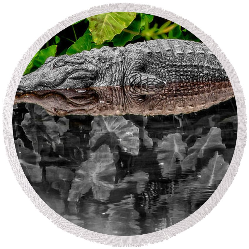 American Round Beach Towel featuring the photograph Let Sleeping Gators Lie - Mod by Christopher Holmes