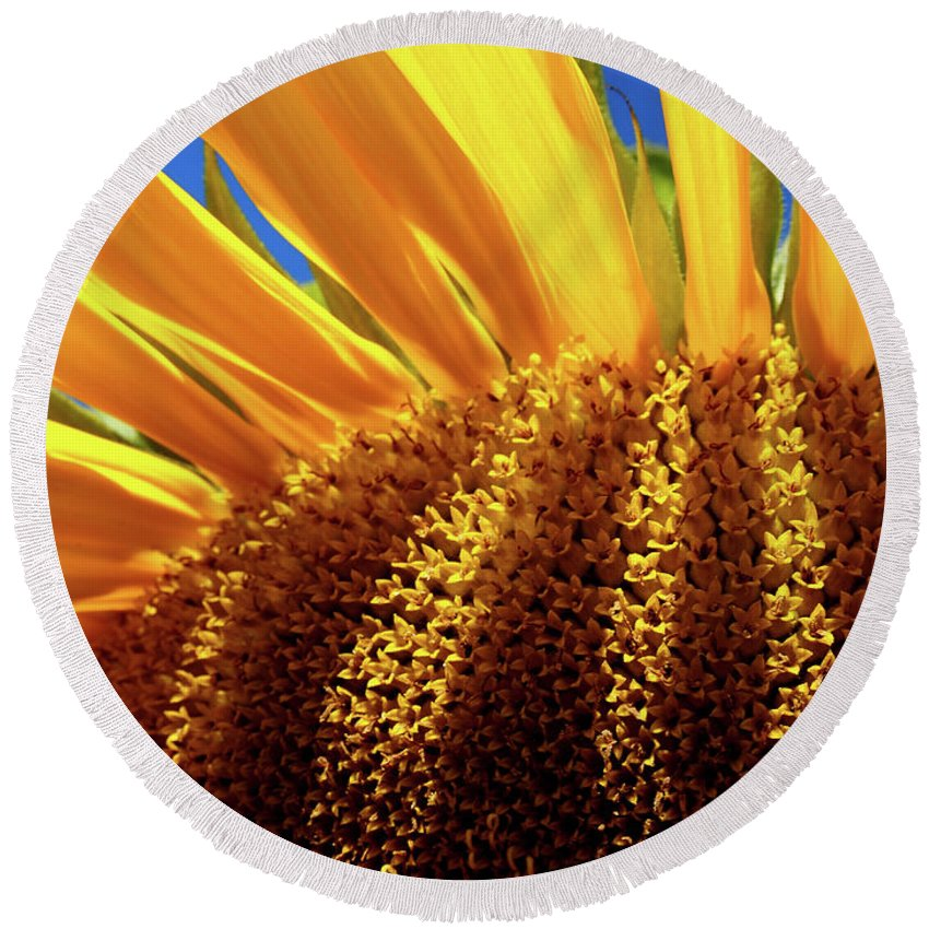 Sunflower Round Beach Towel featuring the photograph Let The Light Shine In by Rod Stewart