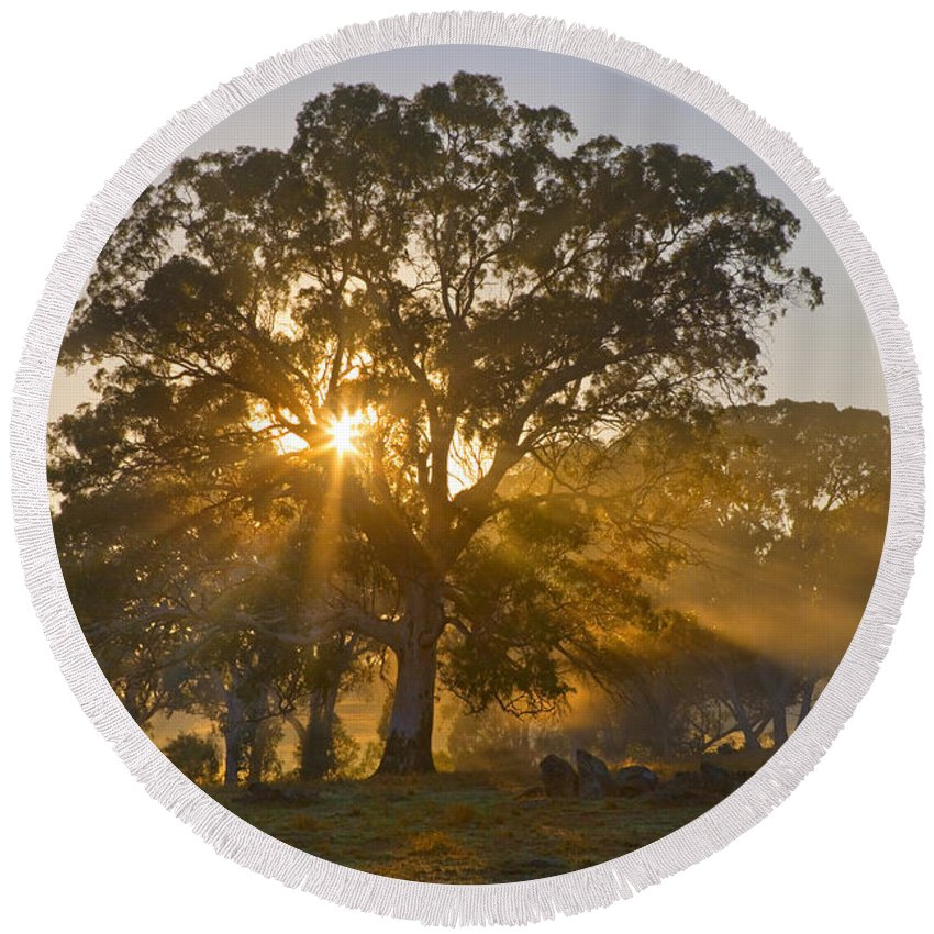 Tree Round Beach Towel featuring the photograph Let There Be Light by Mike Dawson