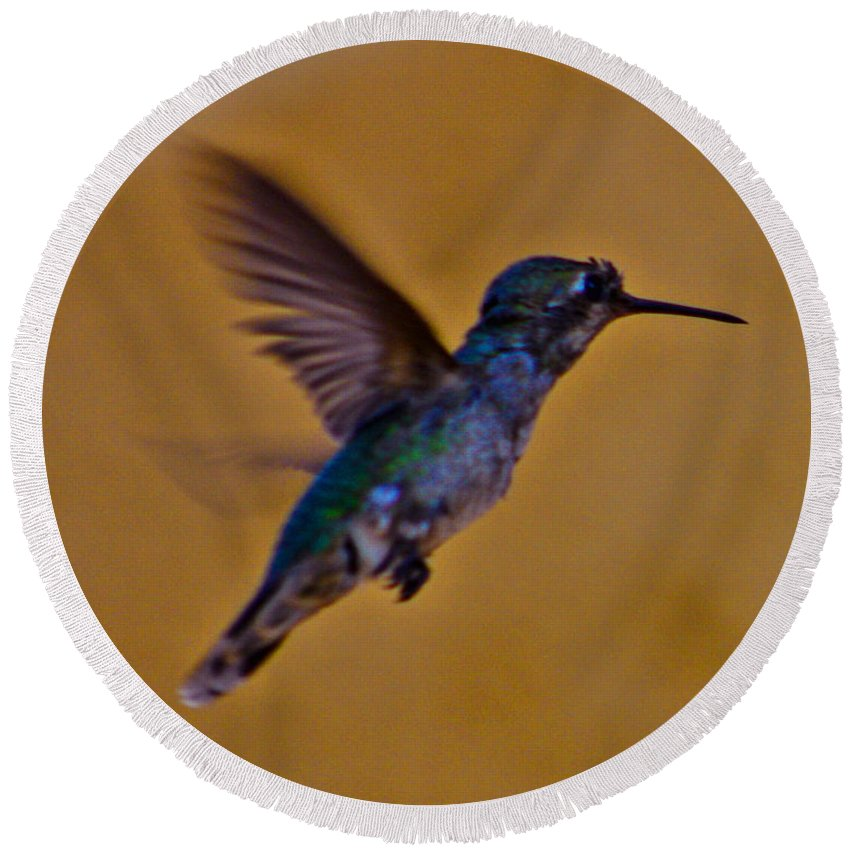 Hummingbird Round Beach Towel featuring the photograph Lift Off by Tommy Anderson