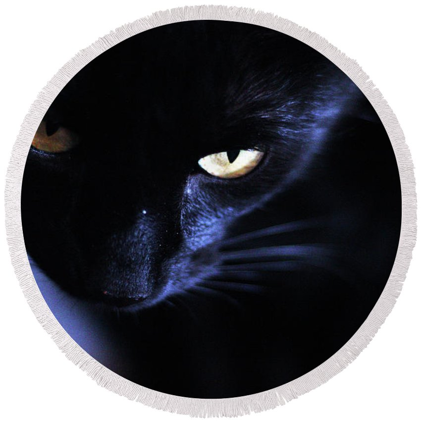 Cats Round Beach Towel featuring the photograph Light And Dark by Samantha Burrow