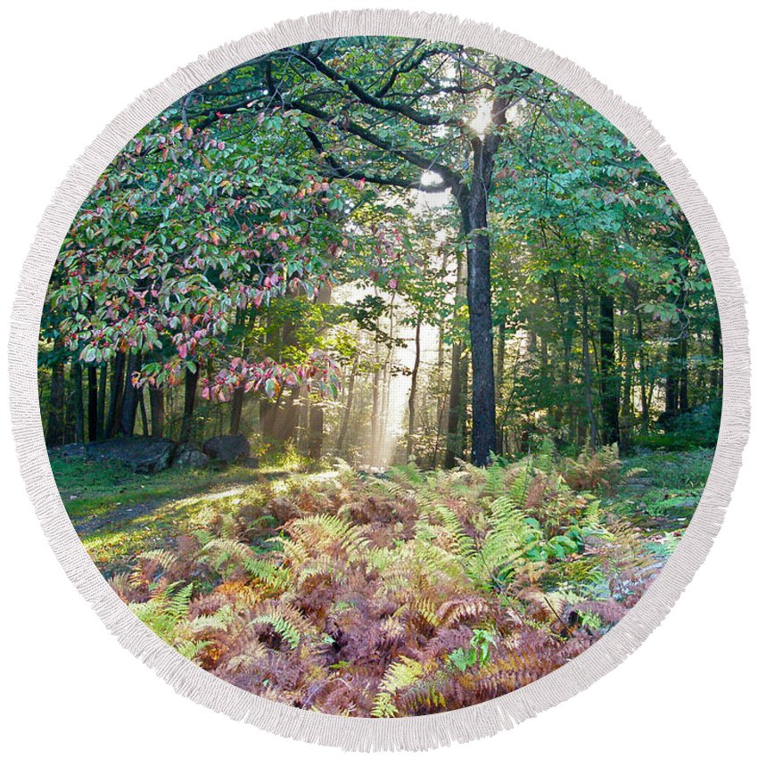 Light Round Beach Towel featuring the photograph Light In The Forest by Mother Nature