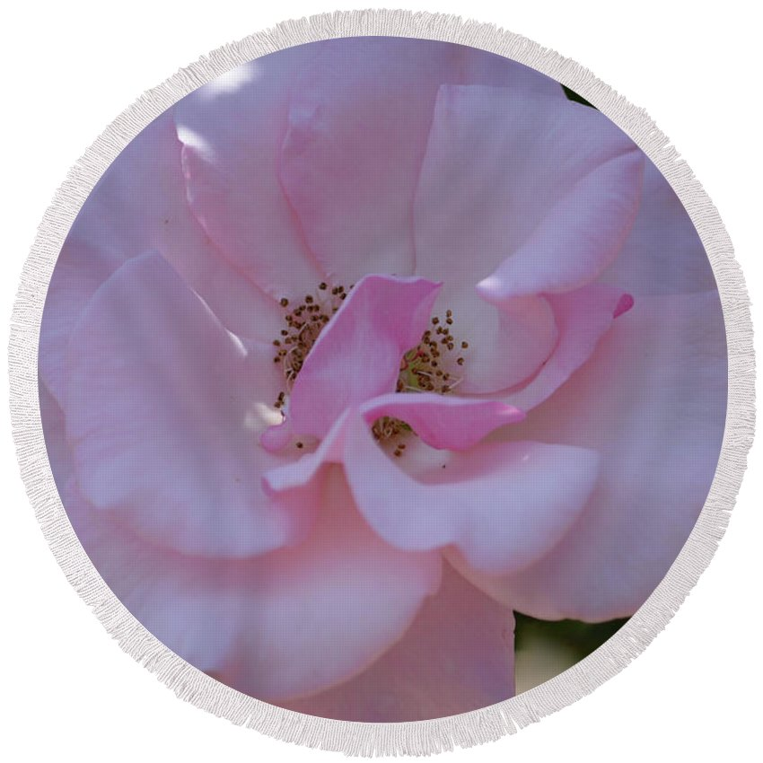 Light Pink Rose Round Beach Towel featuring the photograph Light Pink Rose by Ruth Housley