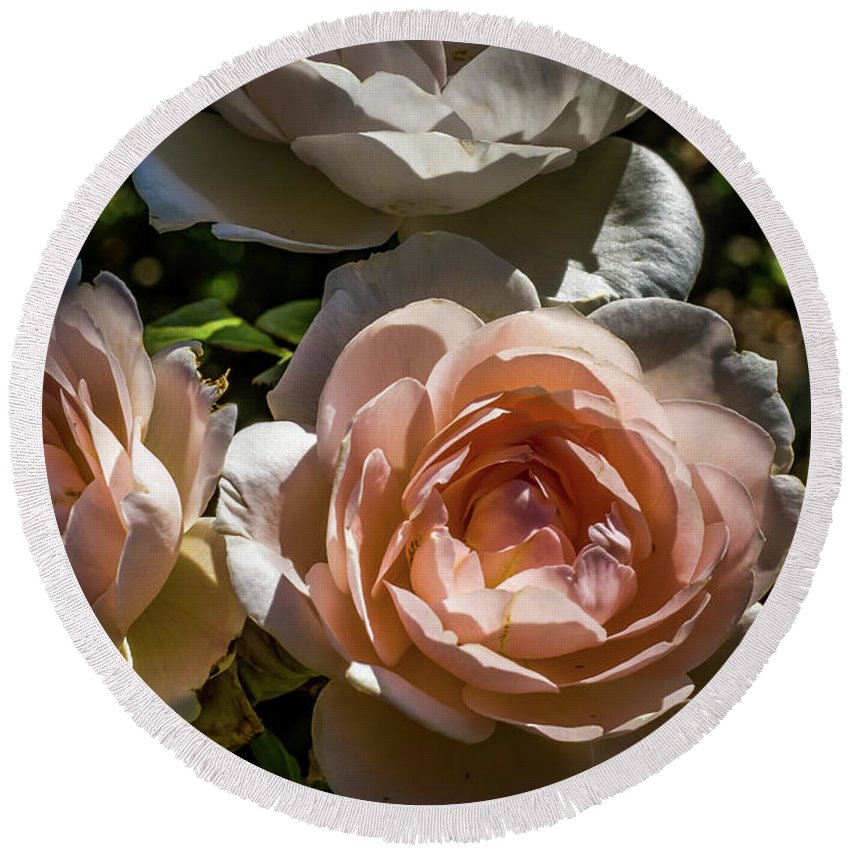 Natural Round Beach Towel featuring the photograph Light Pink Roses by Howard Roberts