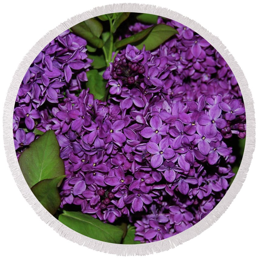 Lilac Round Beach Towel featuring the photograph Lilac by AJ Harlan