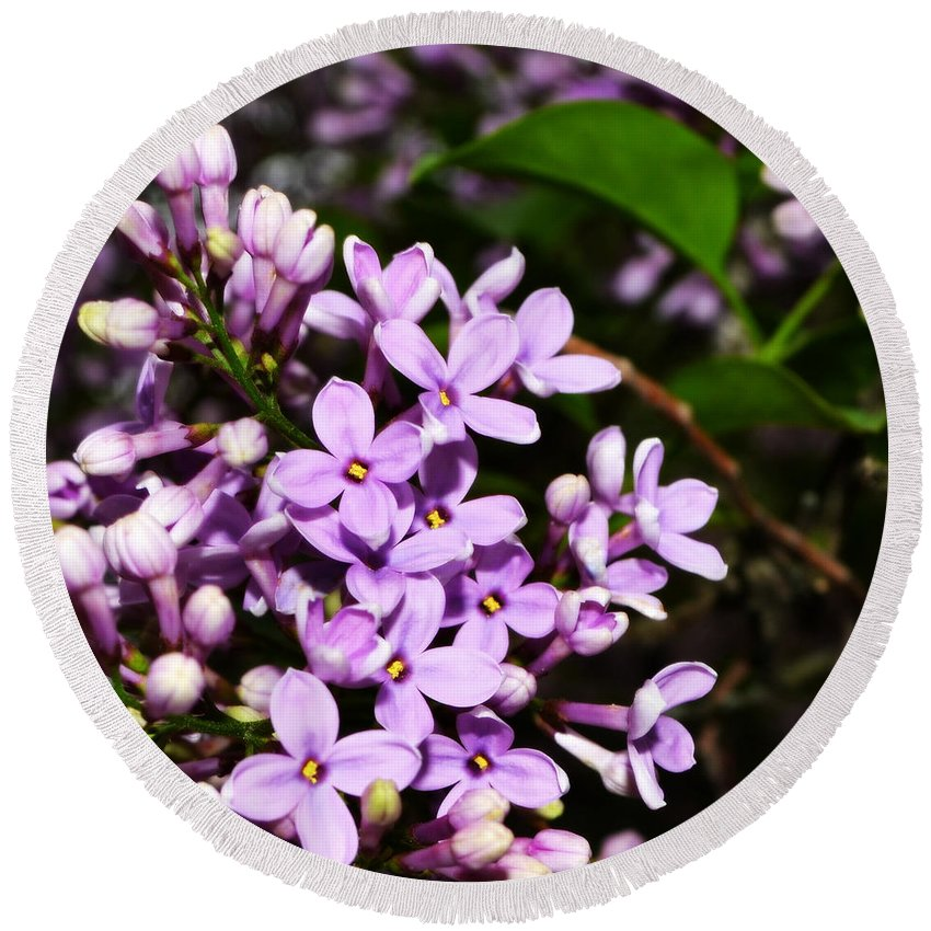 Backyard Round Beach Towel featuring the photograph Lilac Bush In Spring by Michelle Calkins