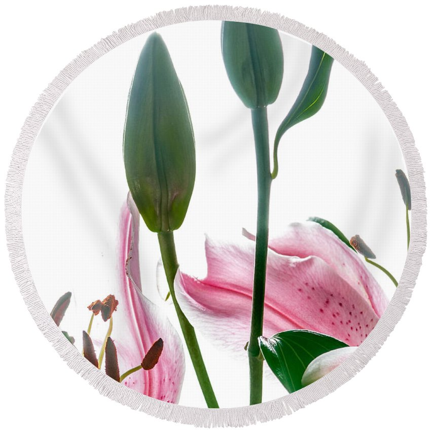 Lilies Round Beach Towel featuring the photograph Pink Oriental Starfire Lilies by David Perry Lawrence