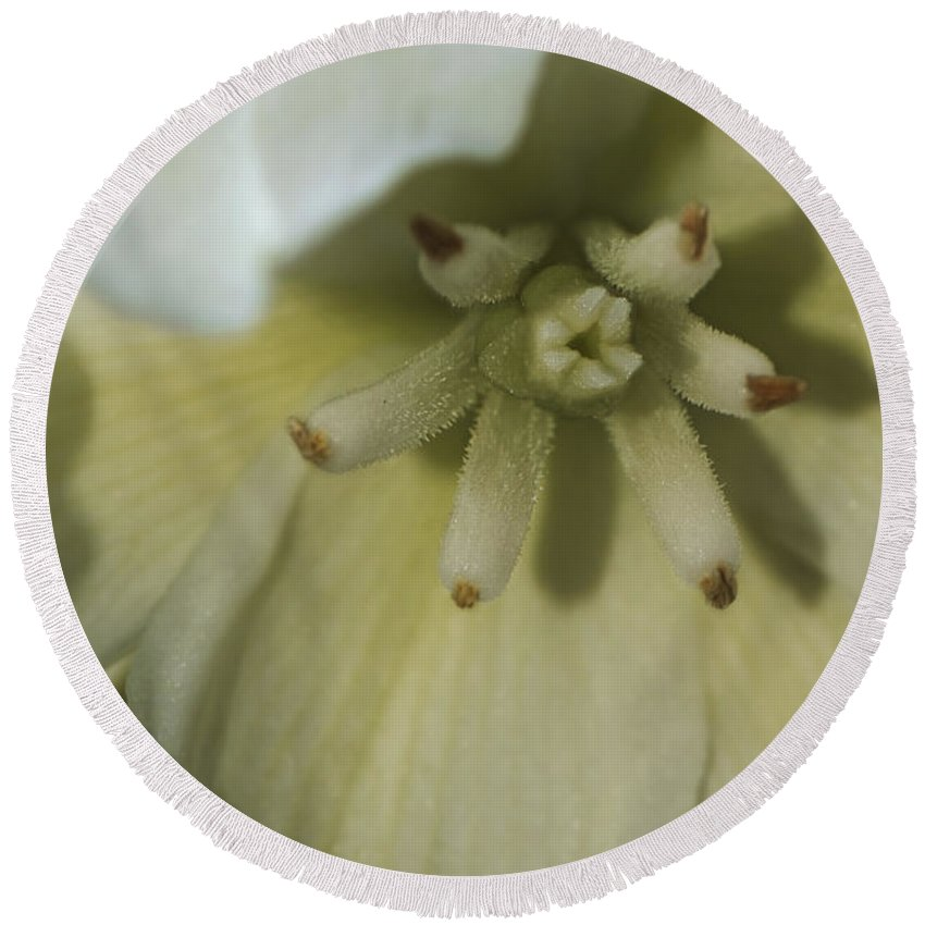 Lily Round Beach Towel featuring the photograph Lily by Jayne Gohr