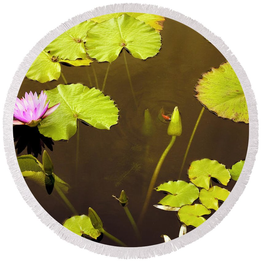 Lily Pad Round Beach Towel featuring the photograph Lily Pads 1 by Madeline Ellis