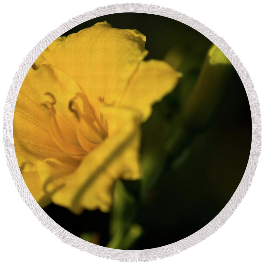 Lily Round Beach Towel featuring the photograph Lily by Paul Mangold