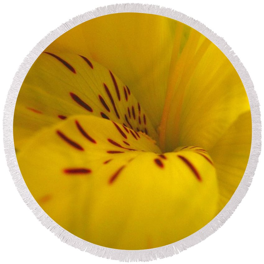 Yellow Round Beach Towel featuring the photograph Lily by Rhonda Barrett