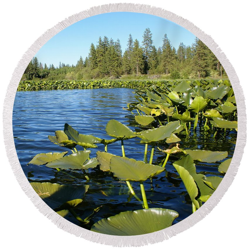 Nature Round Beach Towel featuring the photograph Lilypads On Amber Lake by Ben Upham III