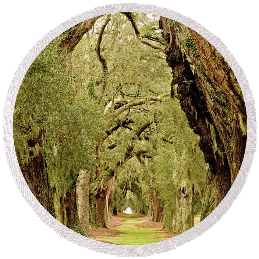 Forest Round Beach Towel featuring the photograph Line Of Oak Trees To Distance by Darryl Brooks