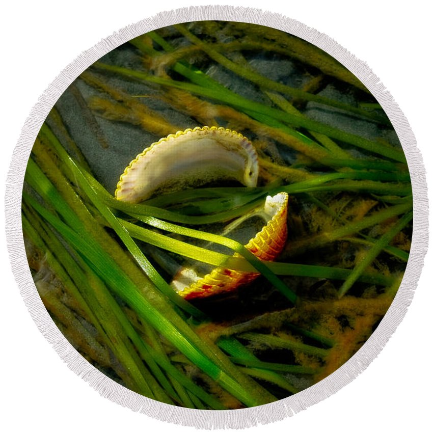Algae Round Beach Towel featuring the photograph Linguini With Clams by Venetta Archer