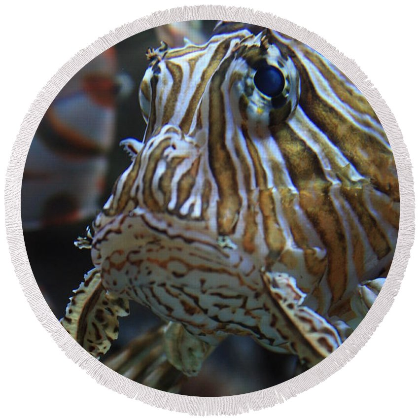 Fish Round Beach Towel featuring the photograph Lion Fish Profile by Carol Groenen