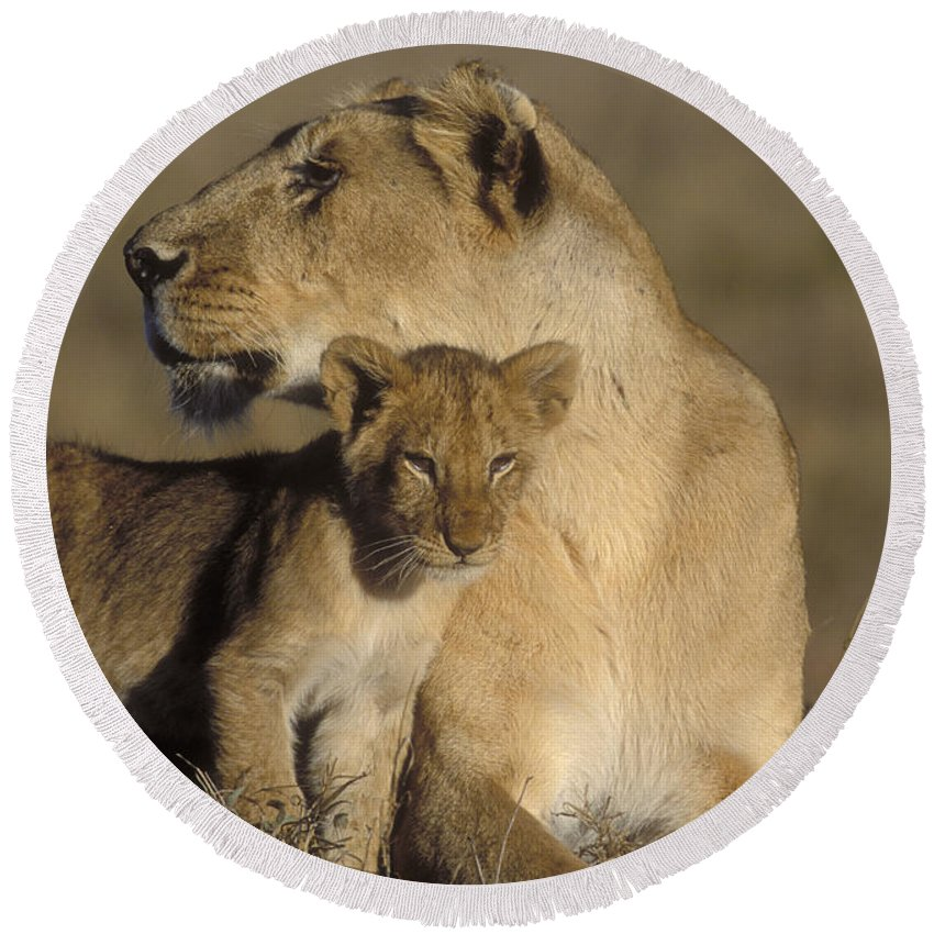 Lioness Round Beach Towel featuring the photograph Lioness And Her Cub by Sandra Bronstein