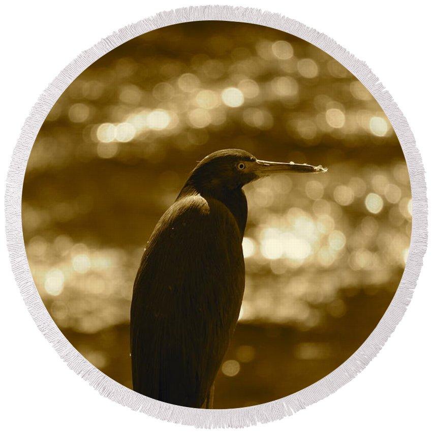 Heron Round Beach Towel featuring the photograph Little Blue Heron In Golden Light by Carol Groenen
