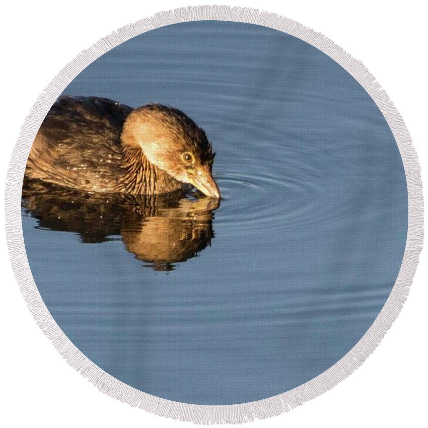 Wildlife Round Beach Towel featuring the photograph Little Brown Duck by John Benedict