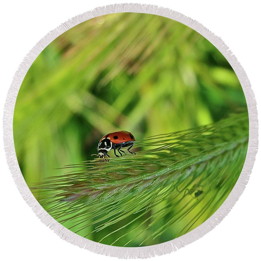 Ladybug Round Beach Towel featuring the photograph Little Lady by Diana Hatcher