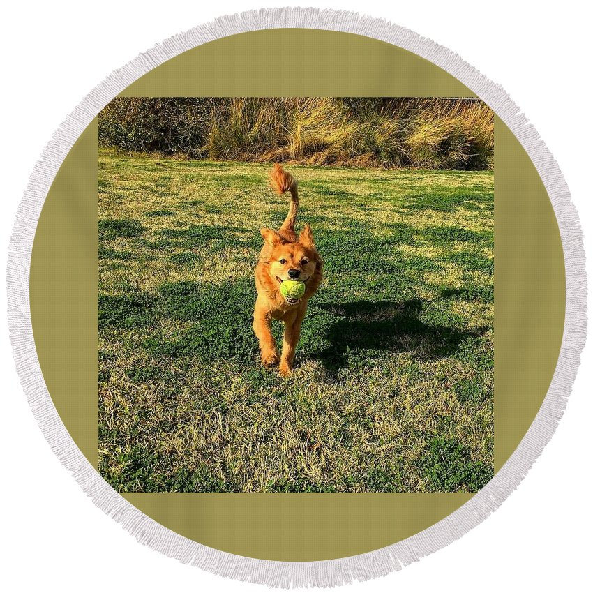 Lion Round Beach Towel featuring the photograph Little Lion by Xavier Moran