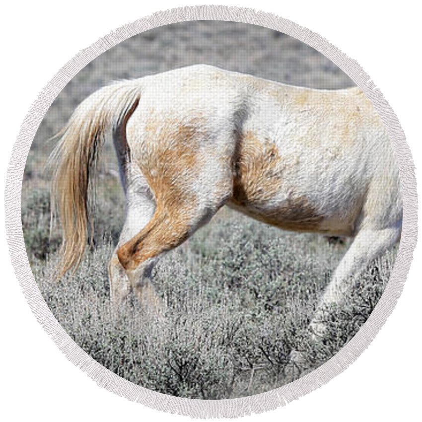 Horses Round Beach Towel featuring the photograph Little Tail Gater by Athena Mckinzie