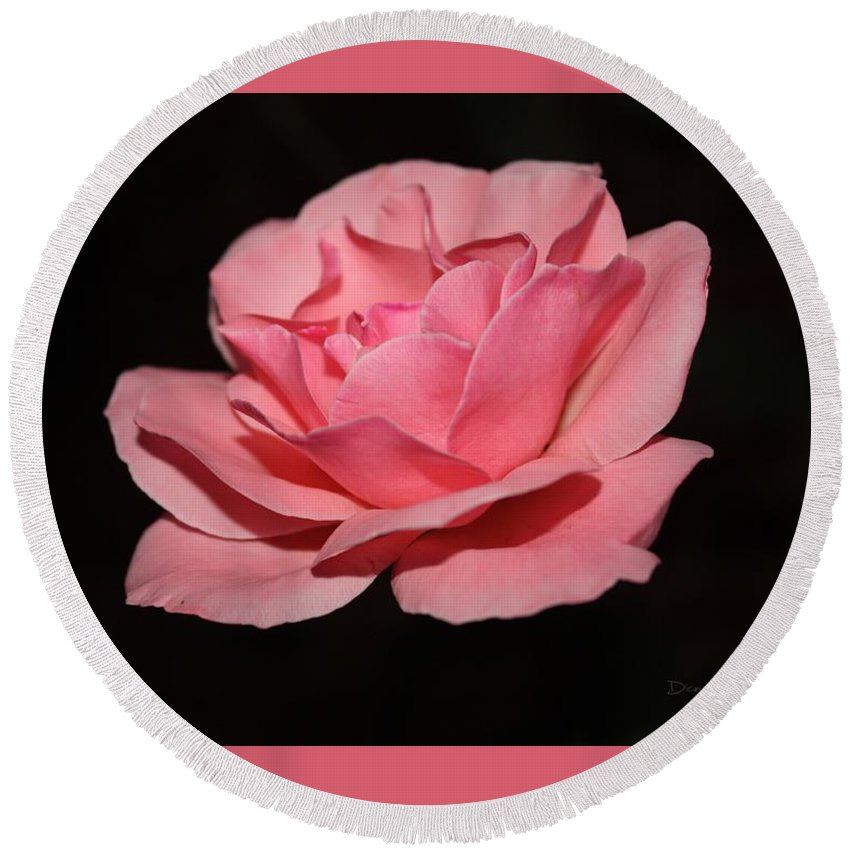 Rose Round Beach Towel featuring the photograph Liv At Dusk by Diane Lindon Coy