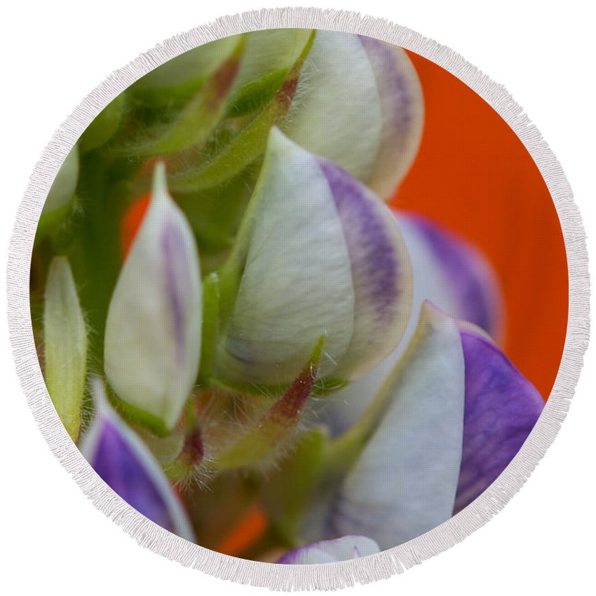 Interior Design Round Beach Towel featuring the photograph Lively Lupine by Lisa Knechtel