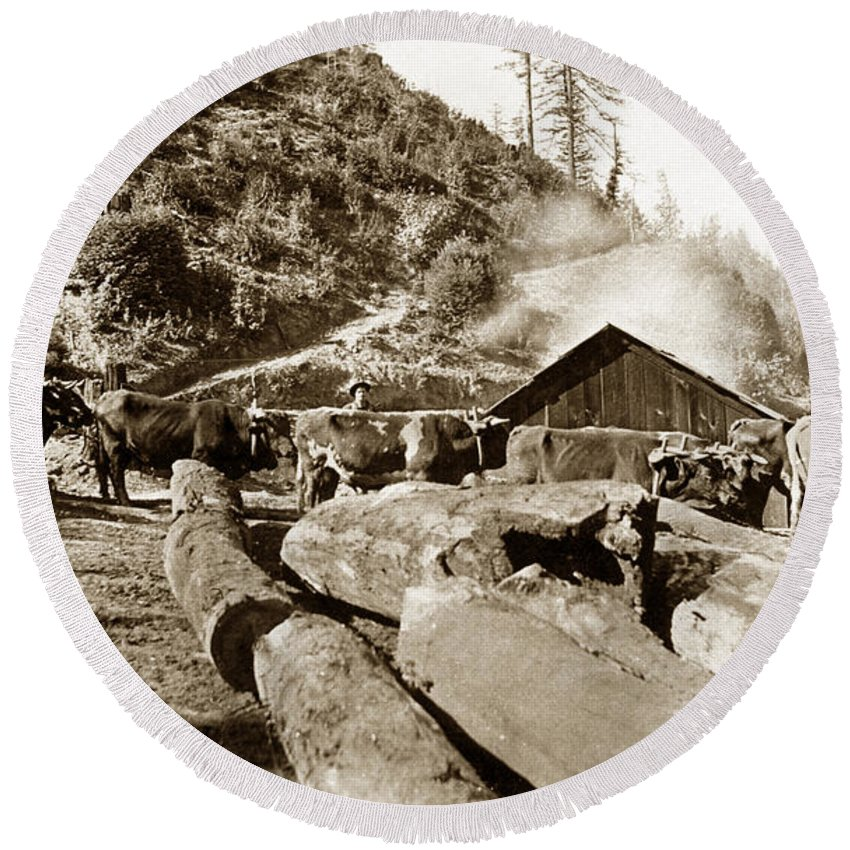 Logging Round Beach Towel featuring the photograph Logging With Oxen At A Saw Mill Sonoma County California Circa 1900 by California Views Mr Pat Hathaway Archives