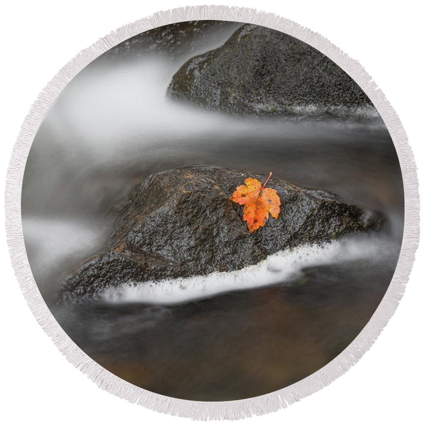 Autumn Round Beach Towel featuring the photograph Lone Leaf by Arti Panchal