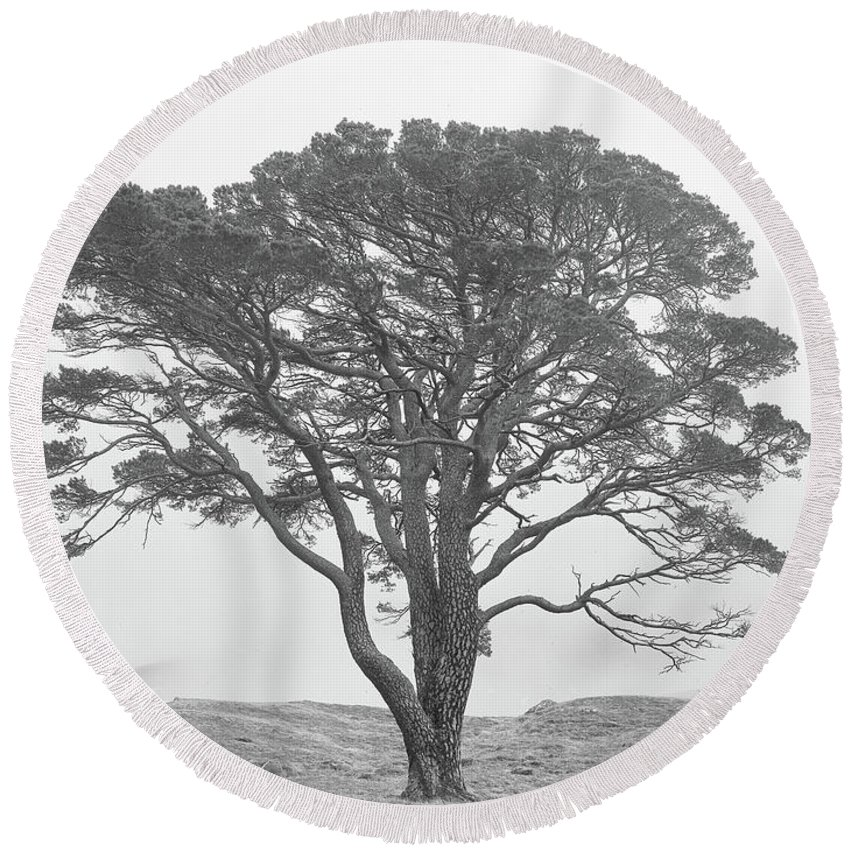 Round Beach Towel featuring the photograph Lone Scots Pine, Crannoch Woods by Iain Duncan