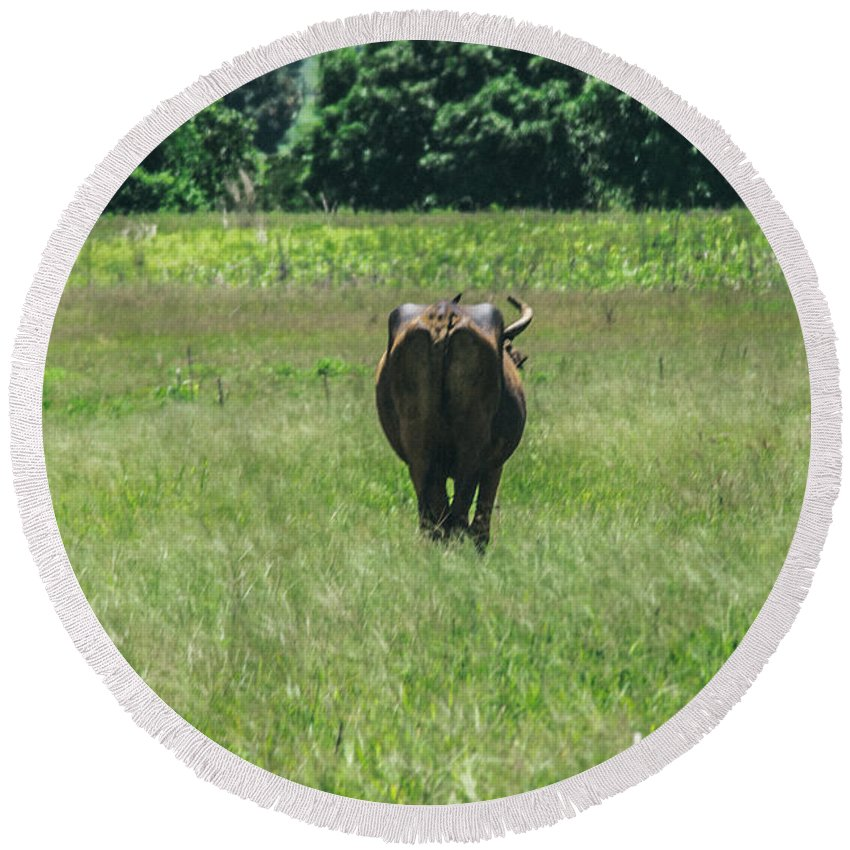 Cows Round Beach Towel featuring the photograph Lonely Cow 2 by Totto Ponce