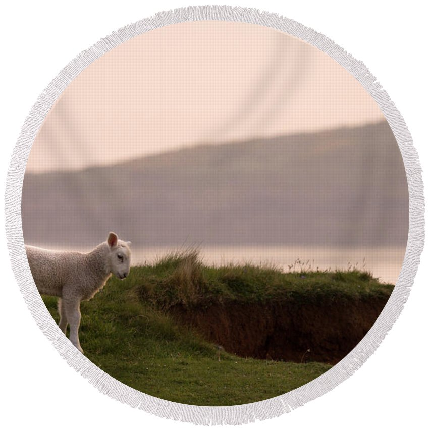 Prancing Lamb Round Beach Towel featuring the photograph Lonely Little Lamb by Angel Ciesniarska