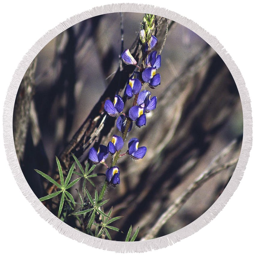 Flower Round Beach Towel featuring the photograph Lonely Lupine by Randy Oberg