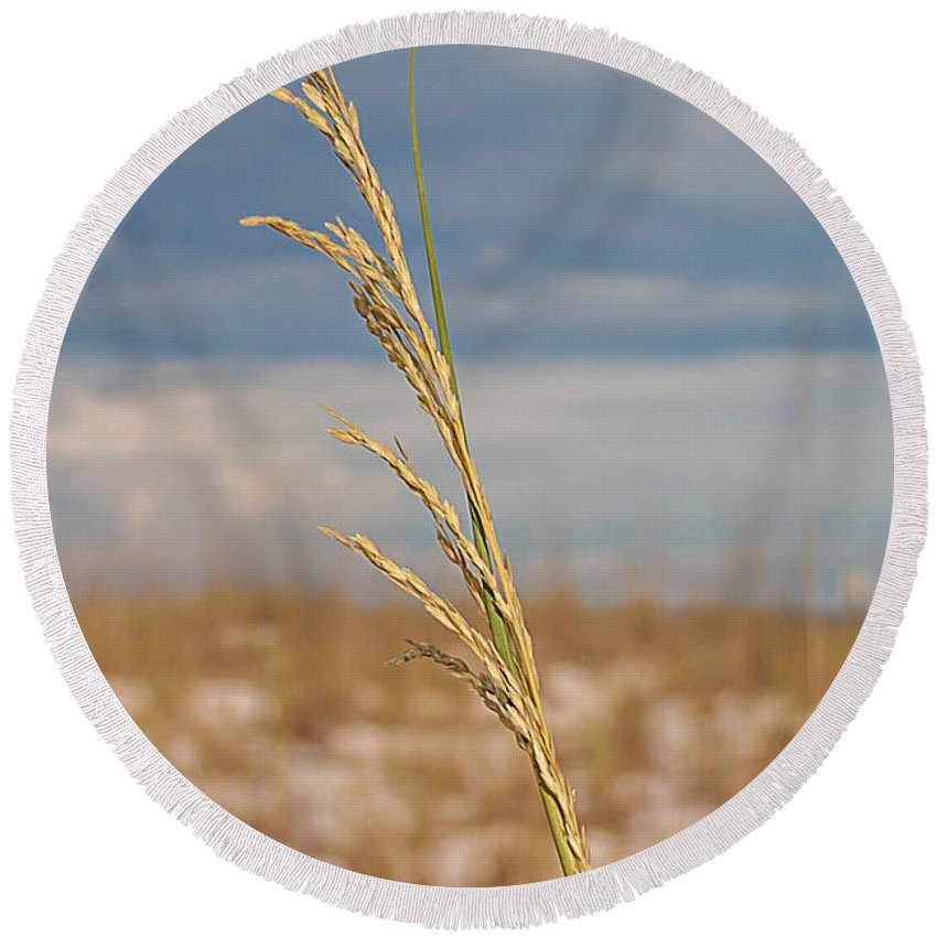 Uniola Paniculata Round Beach Towel featuring the photograph Lonely Sea Oat by Mechala Matthews