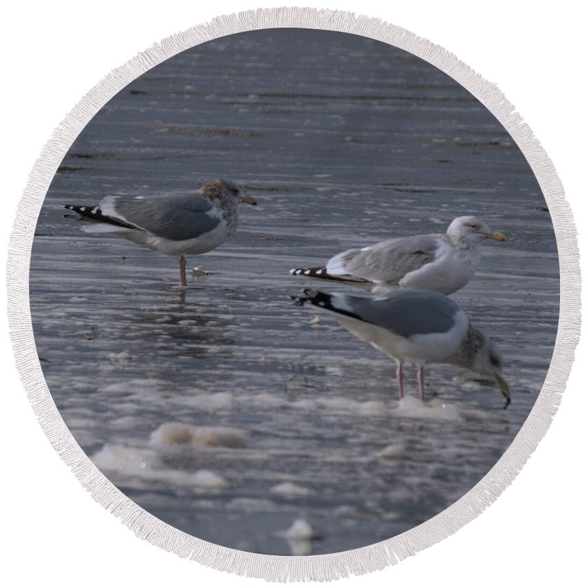 Seagulls Round Beach Towel featuring the photograph Long Beach 2018 Dsc_3604 by Safe Haven Photography Northwest