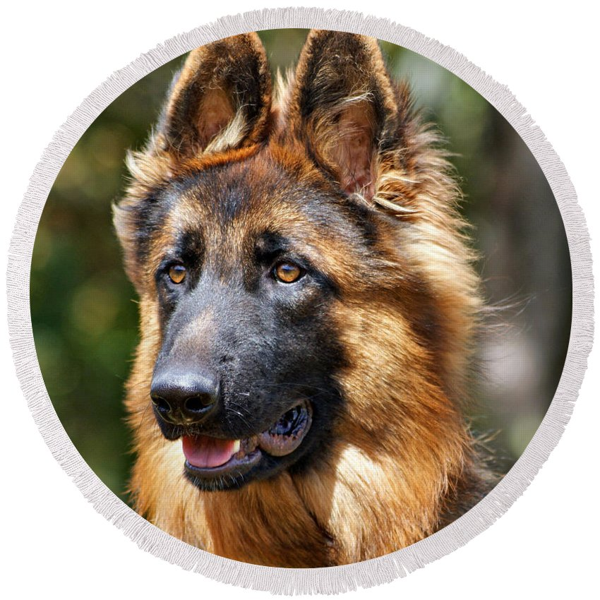 German Shepherd Round Beach Towel featuring the photograph Long Coated German Shepherd Dog by Sandy Keeton