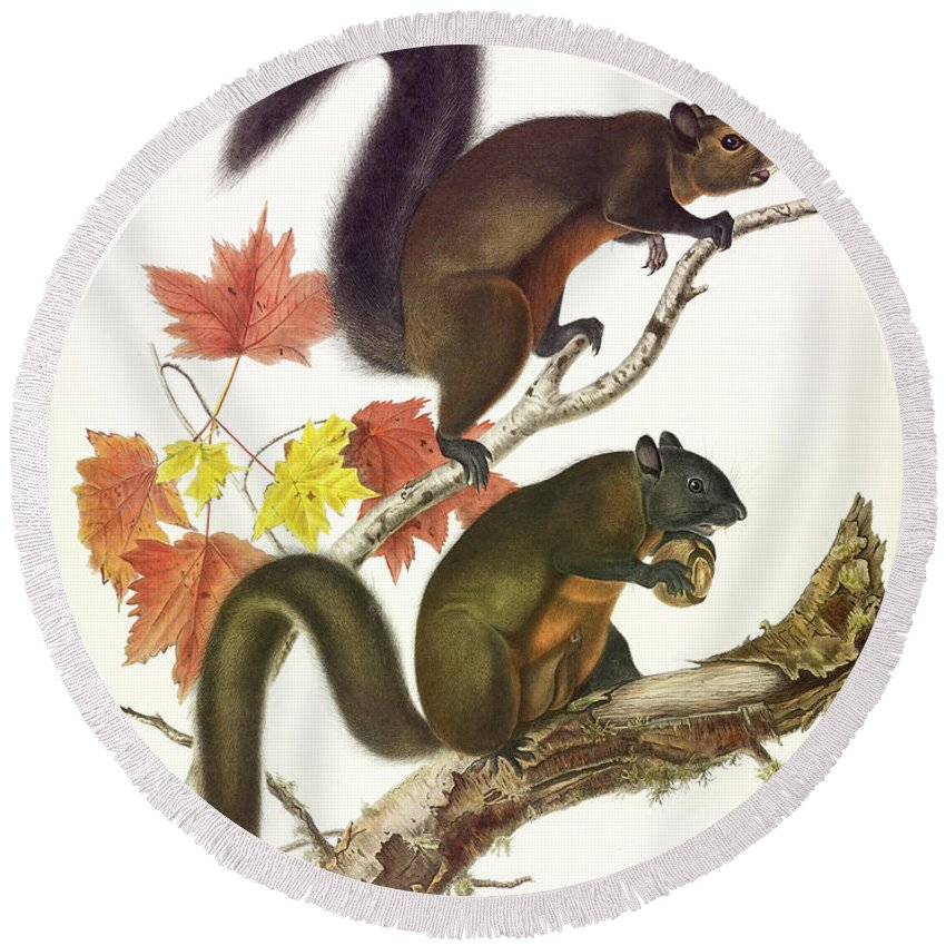 Long-haired Squirrel Round Beach Towel featuring the painting Long-haired Squirrel by John James Audubon