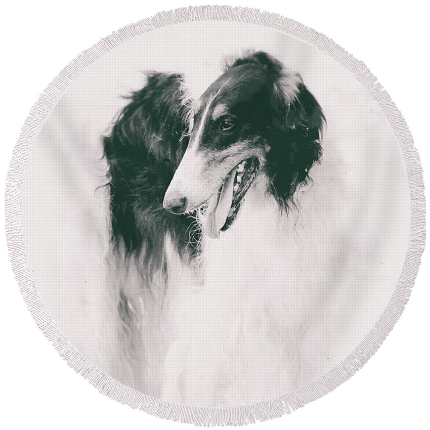 Long-legged Beauty Russian Hound By Irina Safonova Borzoi Round Beach Towel featuring the photograph long-legged beauty Russian hound by Irina Safonova