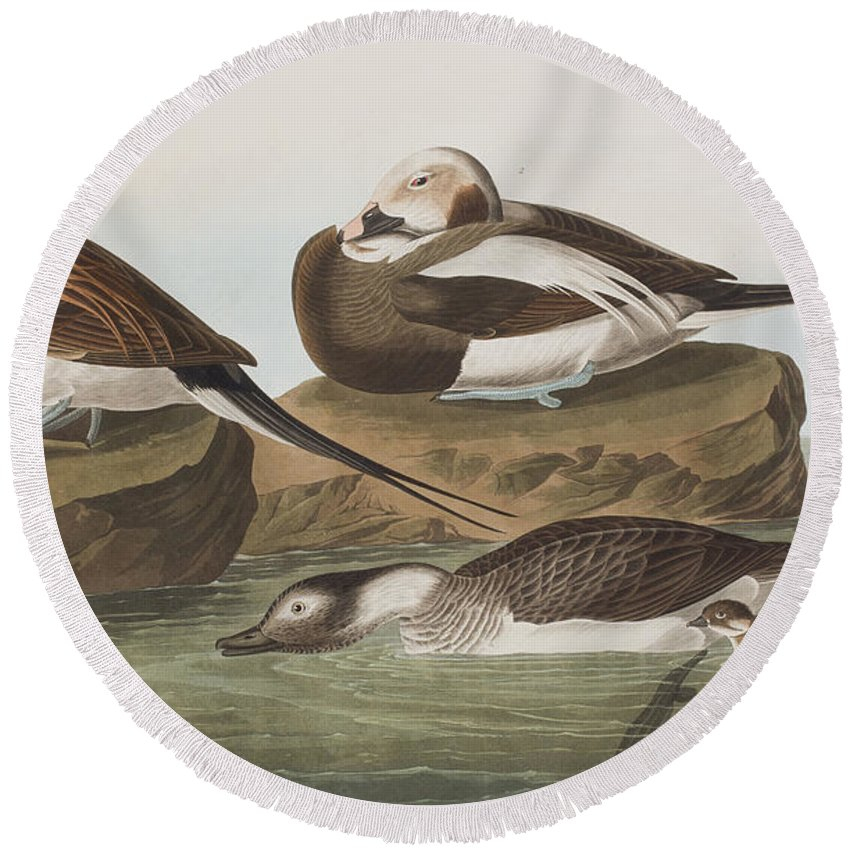 Duck Round Beach Towel featuring the painting Long Tailed Duck by John James Audubon