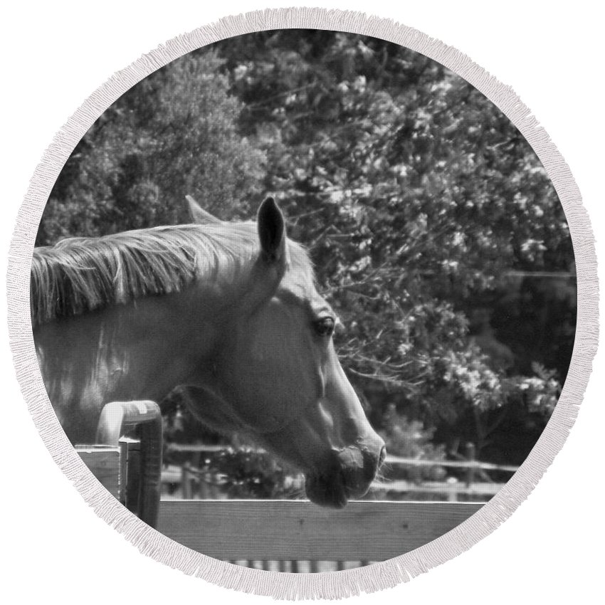 Horse Round Beach Towel featuring the photograph Longing by Sandi OReilly