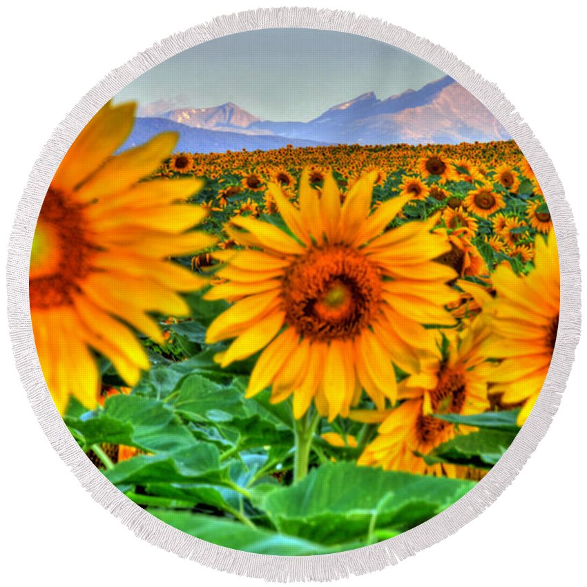 Mountains Round Beach Towel featuring the photograph Longs Sunflowers by Scott Mahon