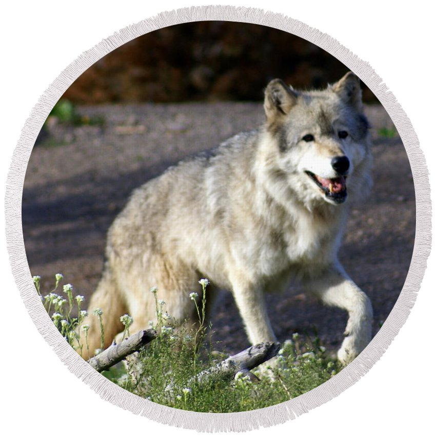 Wildlife Round Beach Towel featuring the photograph Lonly Wolf by Marty Koch
