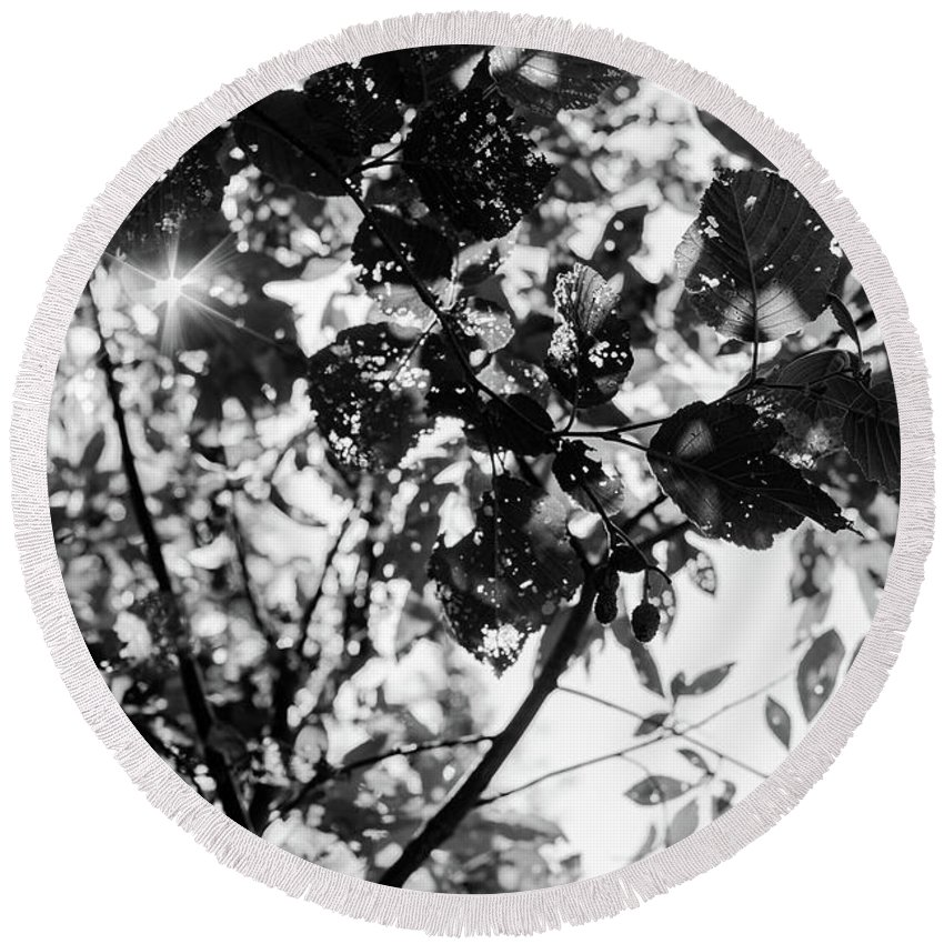 Black And White Round Beach Towel featuring the photograph Look Up by John Gagnon