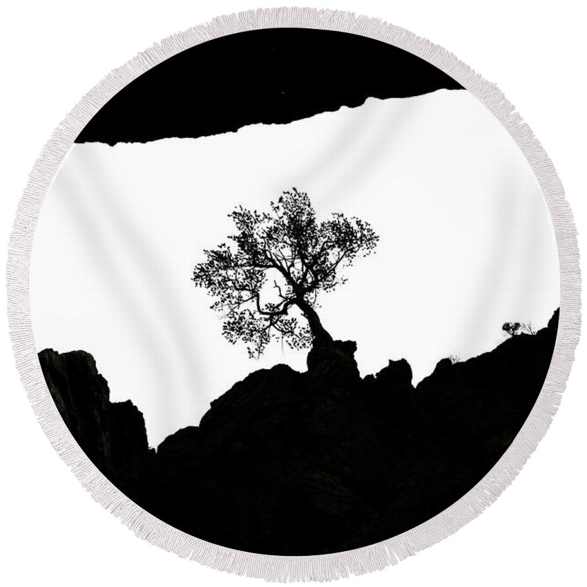Tree Round Beach Towel featuring the photograph Looking Up 2 by Marilyn Hunt